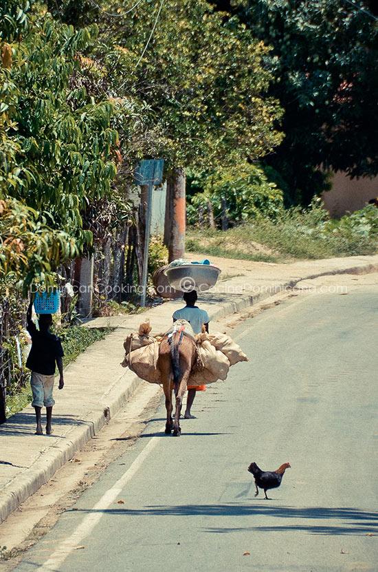 Haiti: the real price of free trade.
