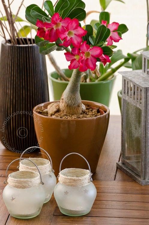 Lámparas con Frascos de Vidrio Esmerilado - Espero que te inspires a hacer algunas de estas manualidades con potes que usualmente solo tirarías a la basura.