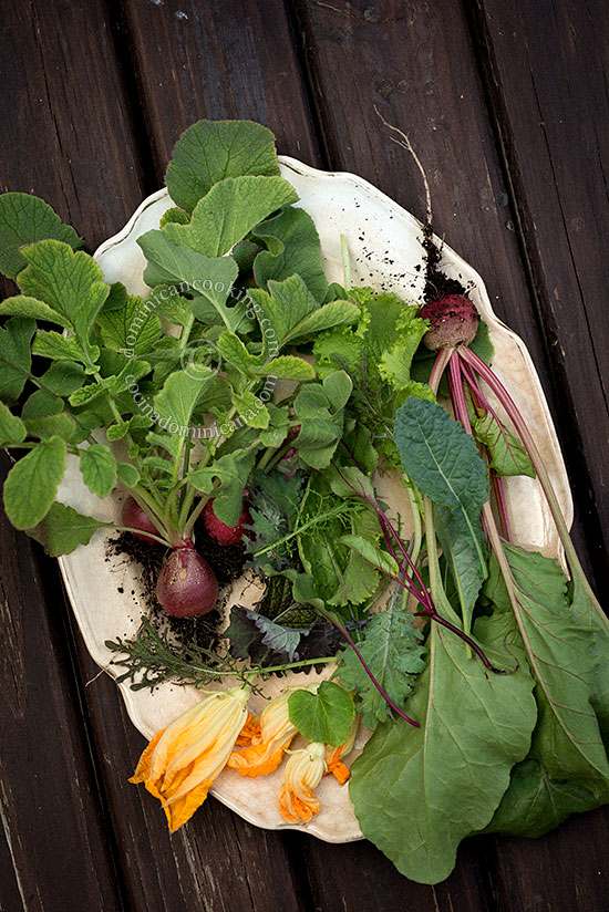 Urban Agriculture - Start Your Own Food Garden: I could call it