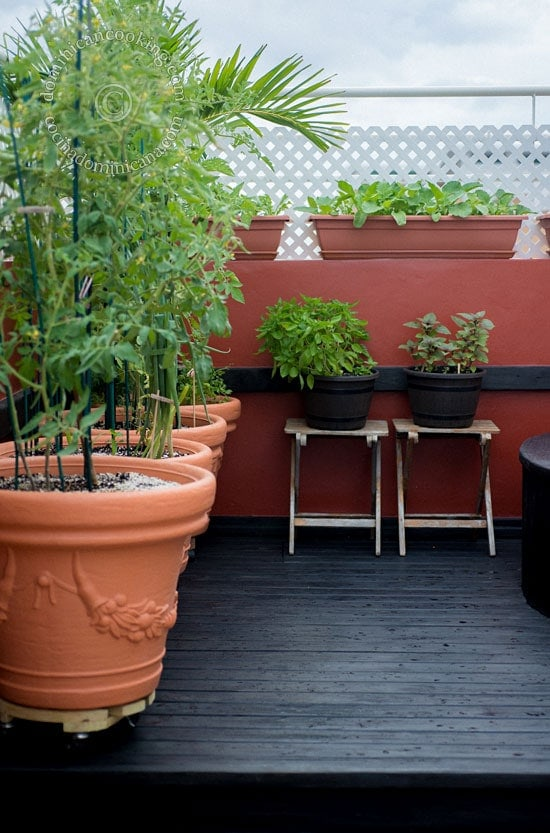 Urban gardening - What you need to start