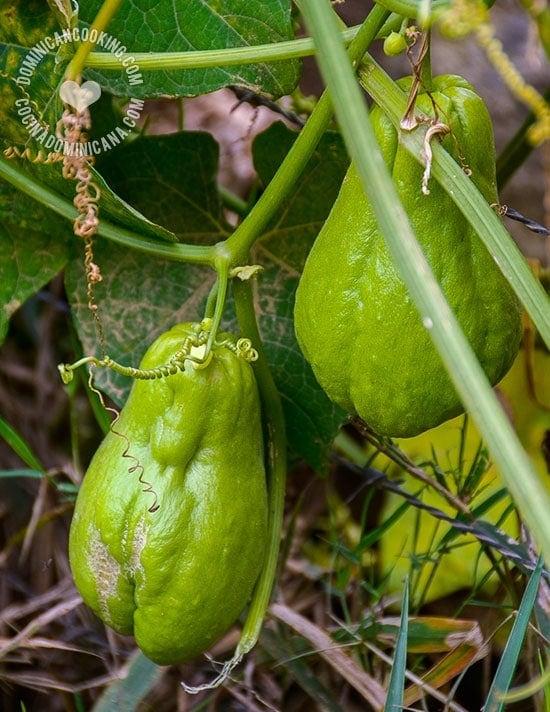 Tayota Guisada con Longaniza: Humilde pero sabroso plato dominicano. El delicado sabor de la tayota se beneficia de los sabores fuertes de la longaniza y van perfectos.